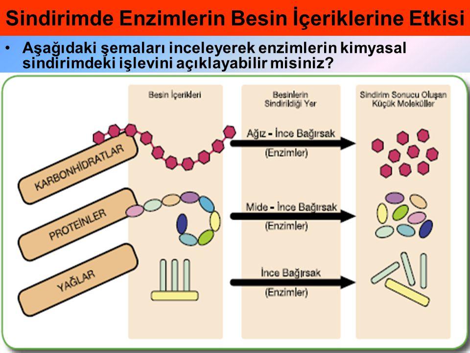 •Aşağıdaki şemaları inceleyerek enzimlerin kimyasal sindirimdeki işlevini açıklayabilir misiniz? Sindirimde Enzimlerin Besin İçeriklerine Etkisi