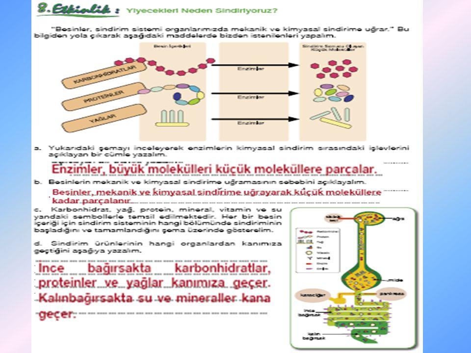 •A•Aşağıdaki şemada sindirime uğrayan besinlerin bağırsaklardan kana, kandan da vücut hücrelerine geçişi görülmektedir.