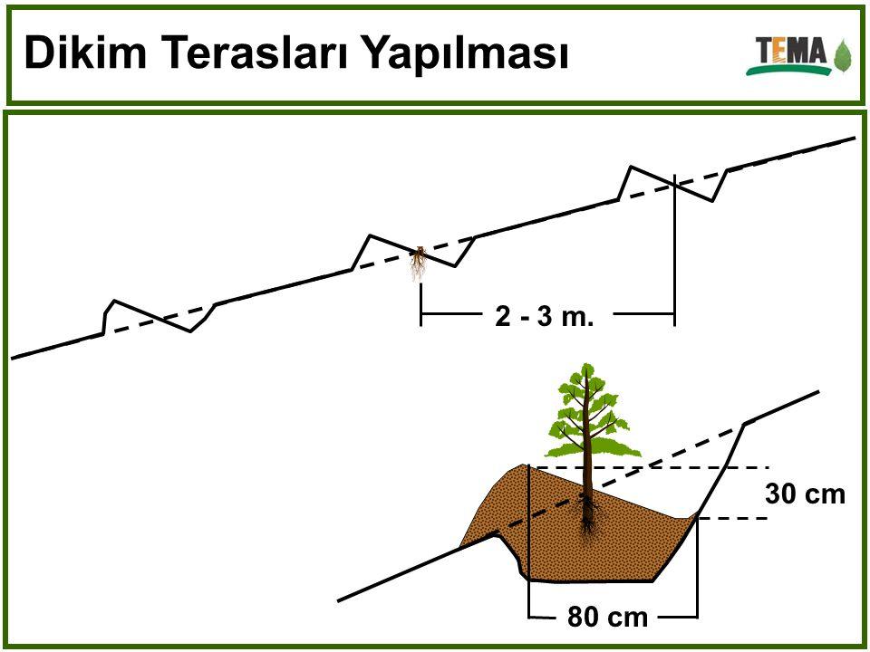Dikim Terasları Yapılması 2 - 3 m. 80 cm 30 cm