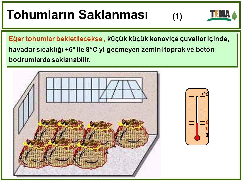 Tohumların Saklanması (1) Eğer tohumlar bekletilecekse, küçük küçük kanaviçe çuvallar içinde, havadar sıcaklığı +6° ile 8°C yi geçmeyen zemini toprak ve beton bodrumlarda saklanabilir.