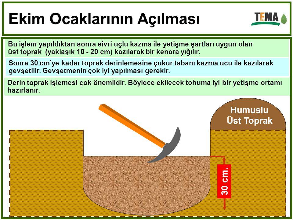 Derin toprak işlemesi çok önemlidir.Böylece ekilecek tohuma iyi bir yetişme ortamı hazırlanır.