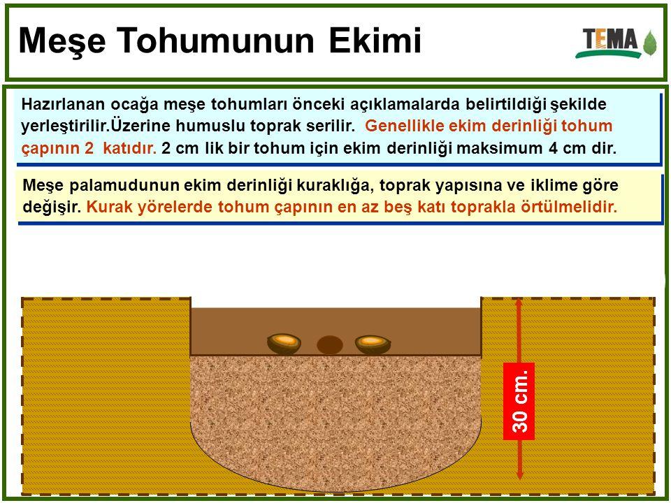 Hazırlanan ocağa meşe tohumları önceki açıklamalarda belirtildiği şekilde yerleştirilir.Üzerine humuslu toprak serilir.