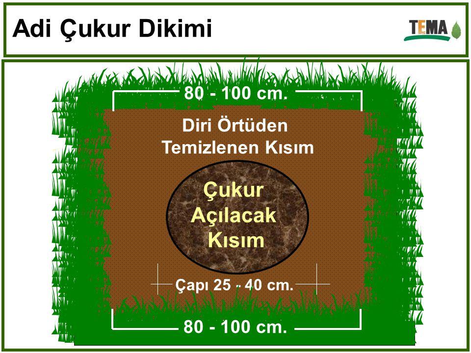 Mineral Toprak Humuslu Üst Toprak Adi Çukur Dikimi (Tüpsüz Fidan) Çukur Derinliği Yaklaşık : İğne Yapraklılarda : 30 cm'dir.