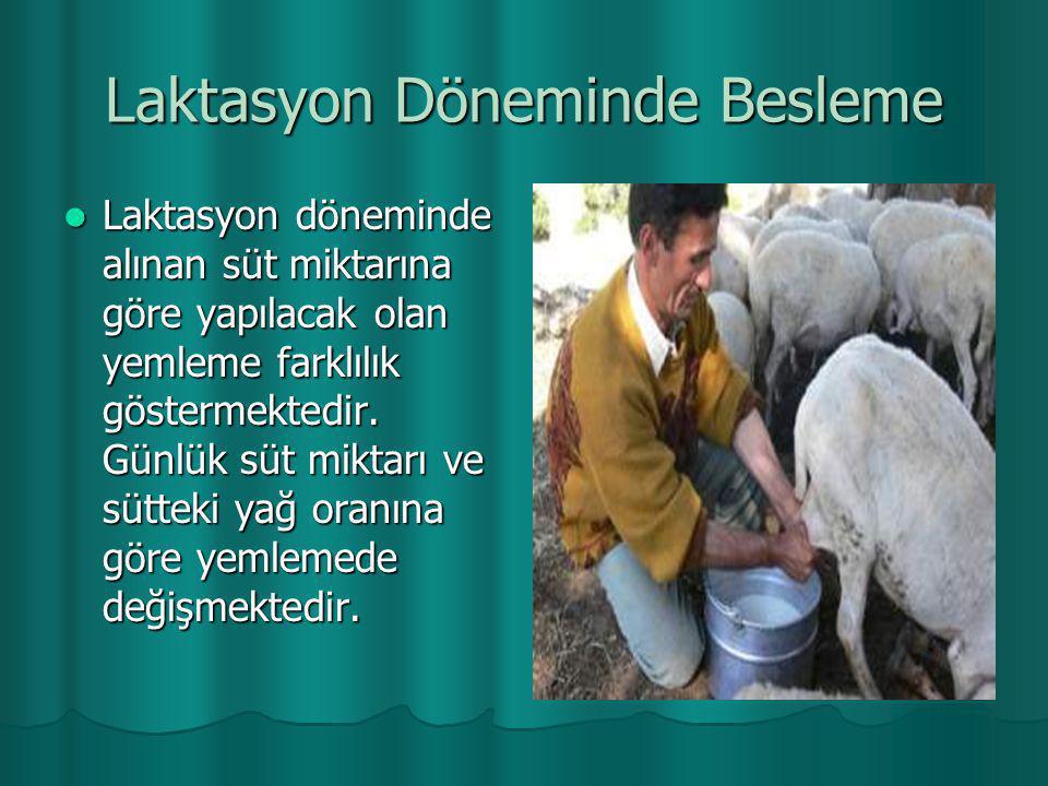 Laktasyon Döneminde Besleme  Laktasyon döneminde alınan süt miktarına göre yapılacak olan yemleme farklılık göstermektedir. Günlük süt miktarı ve süt