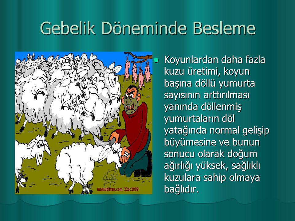 Gebelik Döneminde Besleme  Koyunlardan daha fazla kuzu üretimi, koyun başına döllü yumurta sayısının arttırılması yanında döllenmiş yumurtaların döl