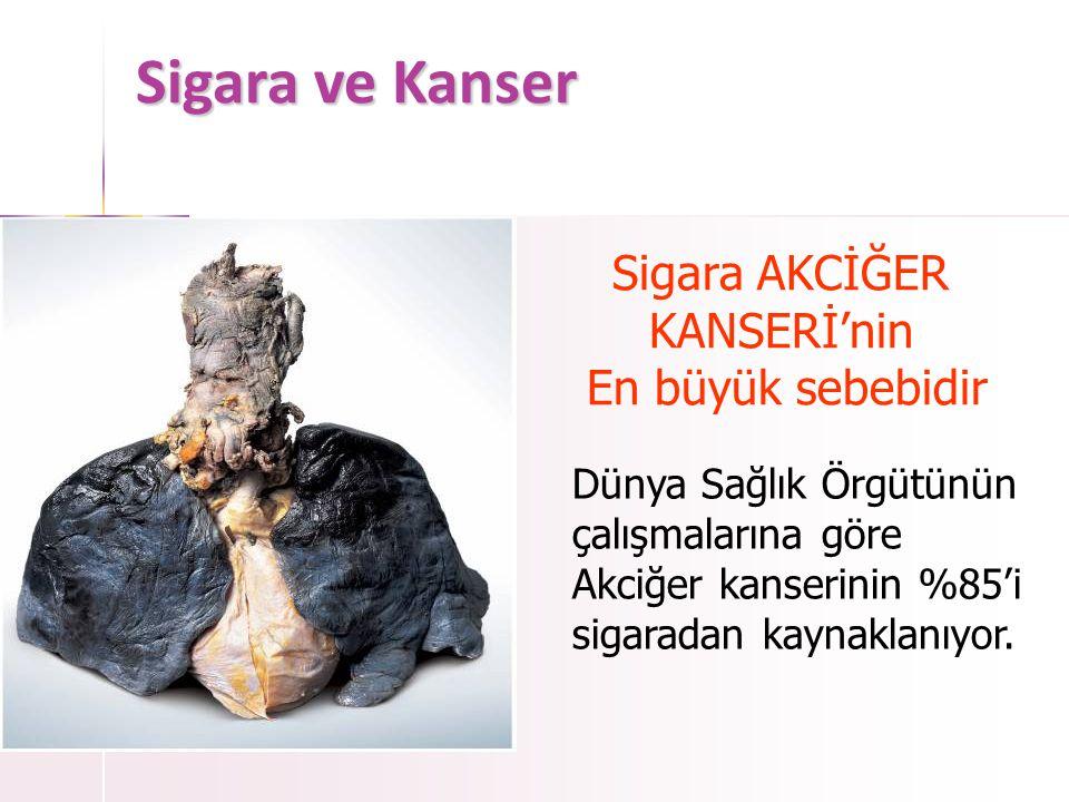 Sigara ve Kanser • Akciğer Kanseri Sigara içmeyen birinin Sigara içen birinin akciğeri akciğeri Kanserli Bölge