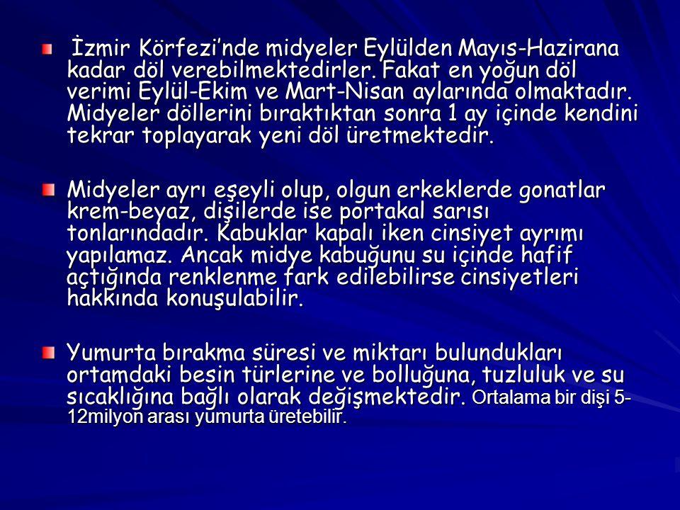İzmir Körfezi'nde midyeler Eylülden Mayıs-Hazirana kadar döl verebilmektedirler. Fakat en yoğun döl verimi Eylül-Ekim ve Mart-Nisan aylarında olmaktad