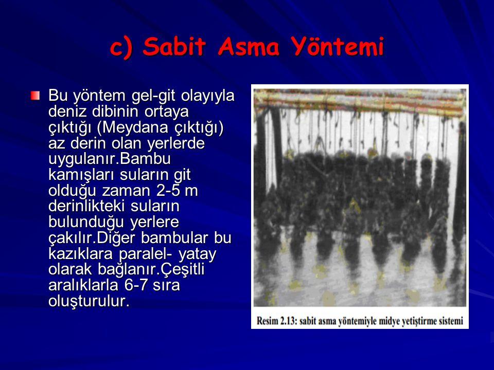 c) Sabit Asma Yöntemi Bu yöntem gel-git olayıyla deniz dibinin ortaya çıktığı (Meydana çıktığı) az derin olan yerlerde uygulanır.Bambu kamışları sular