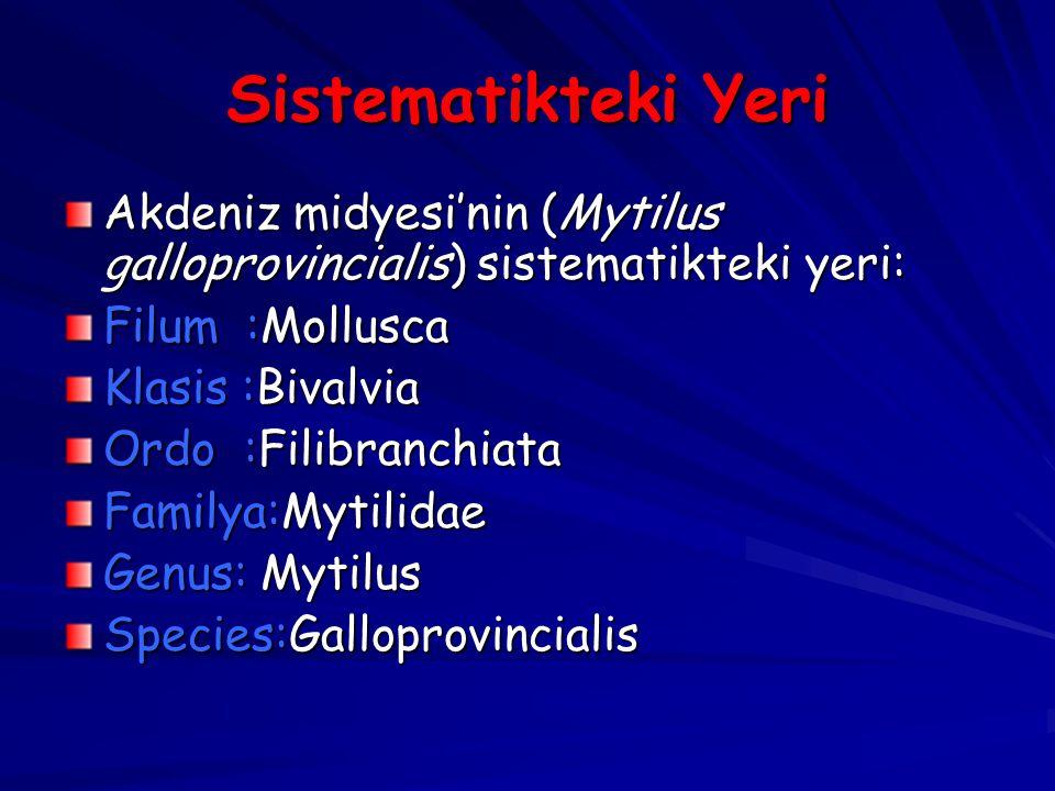 Sistematikteki Yeri Akdeniz midyesi'nin (Mytilus galloprovincialis) sistematikteki yeri: Filum :Mollusca Klasis :Bivalvia Ordo :Filibranchiata Familya