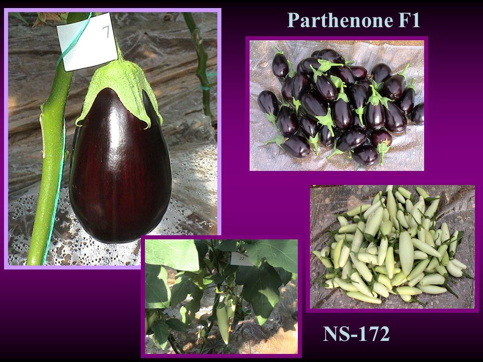 Parthenone F1 NS-172