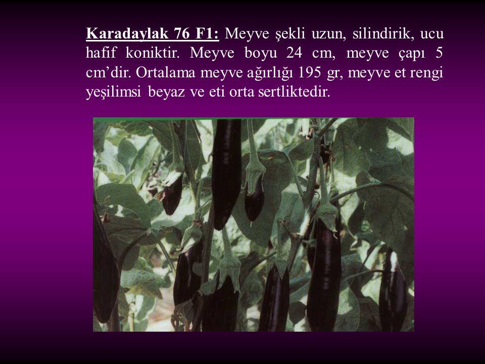 Karadaylak 76 F1: Meyve şekli uzun, silindirik, ucu hafif koniktir. Meyve boyu 24 cm, meyve çapı 5 cm'dir. Ortalama meyve ağırlığı 195 gr, meyve et re