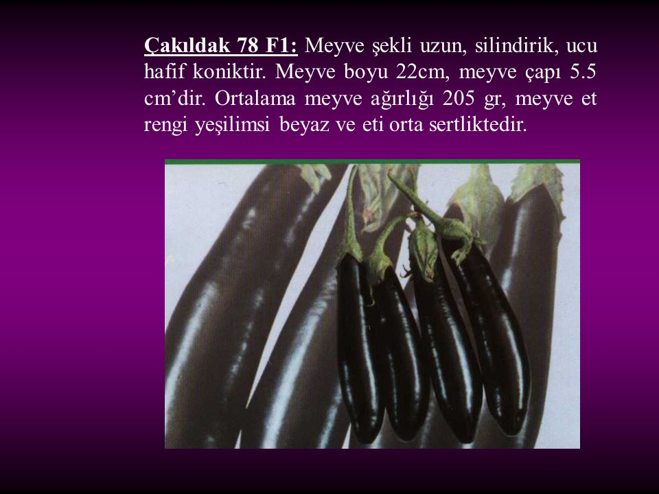 Çakıldak 78 F1: Meyve şekli uzun, silindirik, ucu hafif koniktir. Meyve boyu 22cm, meyve çapı 5.5 cm'dir. Ortalama meyve ağırlığı 205 gr, meyve et ren