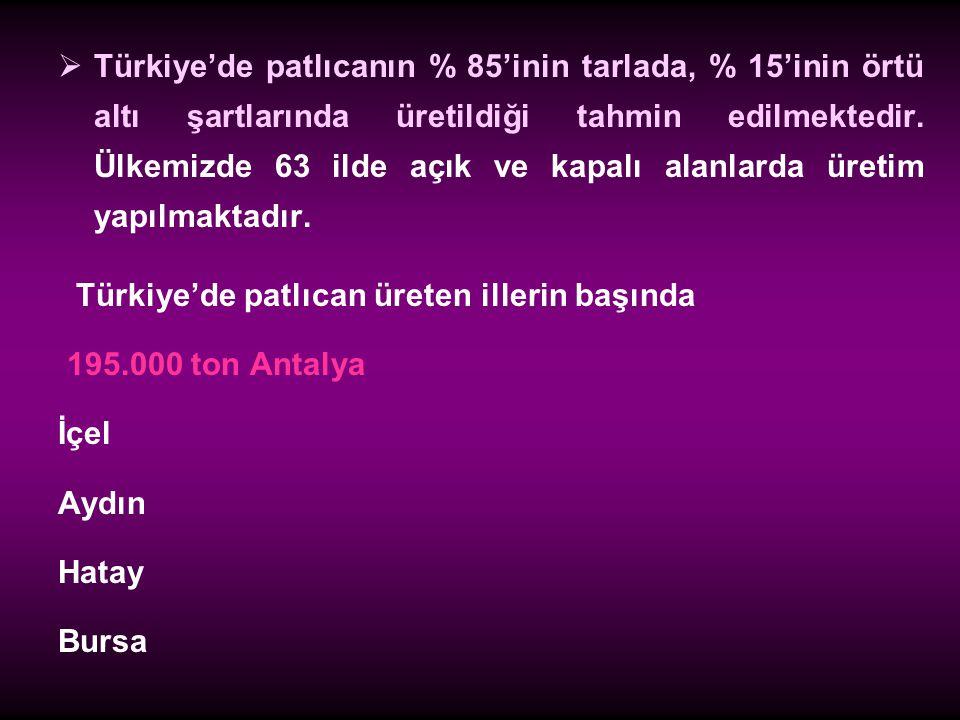 Türkiye'de patlıcanın % 85'inin tarlada, % 15'inin örtü altı şartlarında üretildiği tahmin edilmektedir. Ülkemizde 63 ilde açık ve kapalı alanlarda