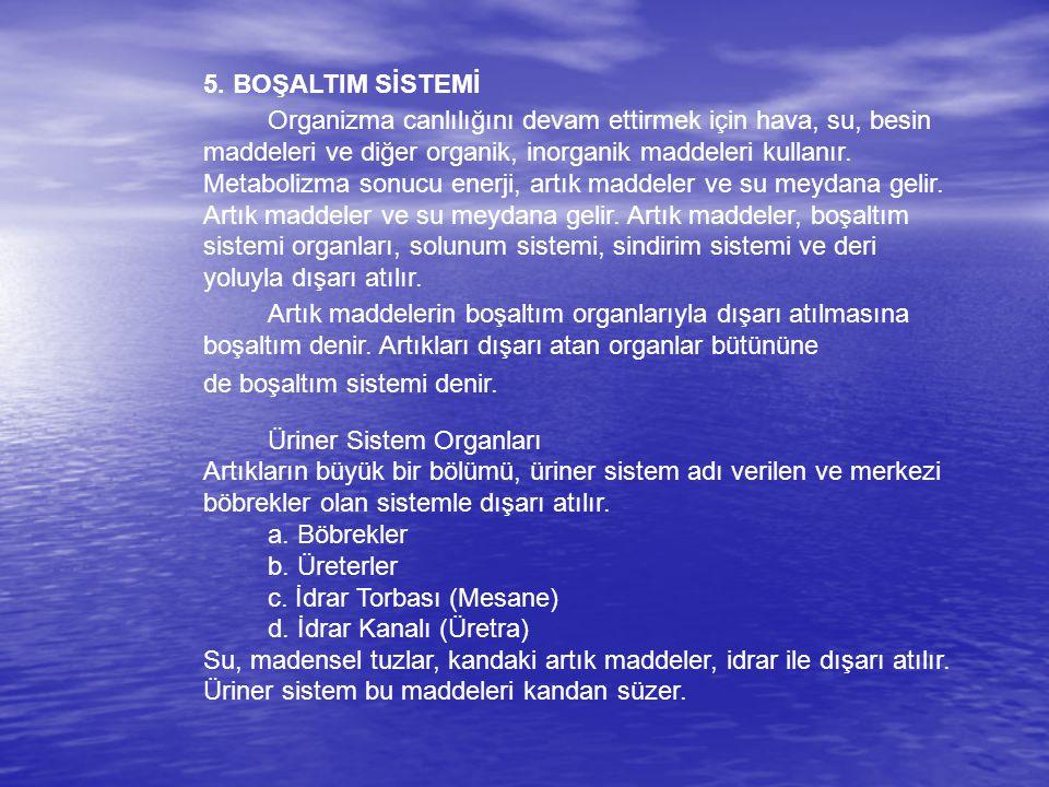 5. BOŞALTIM SİSTEMİ Organizma canlılığını devam ettirmek için hava, su, besin maddeleri ve diğer organik, inorganik maddeleri kullanır. Metabolizma so