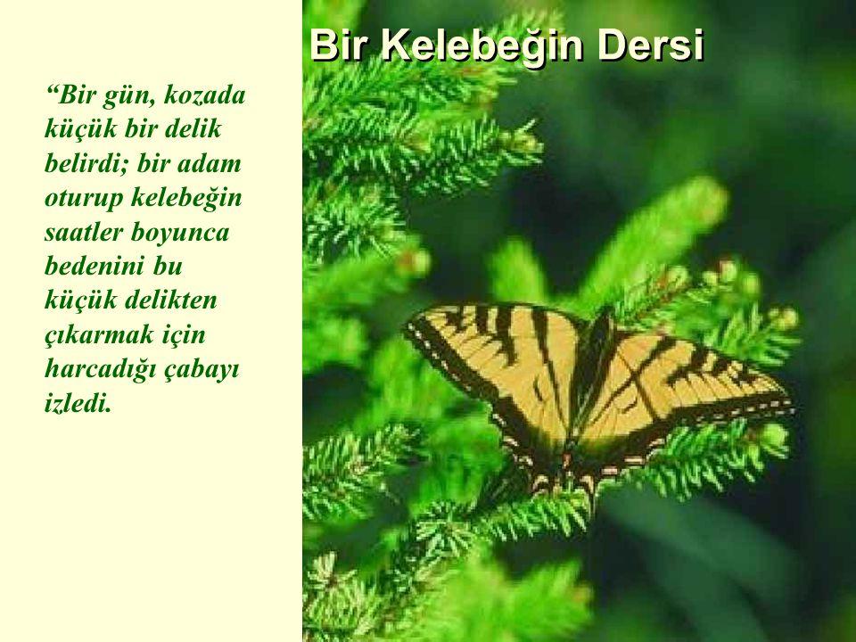 Bir Kelebeğin Dersi Bir gün, kozada küçük bir delik belirdi; bir adam oturup kelebeğin saatler boyunca bedenini bu küçük delikten çıkarmak için harcadığı çabayı izledi.