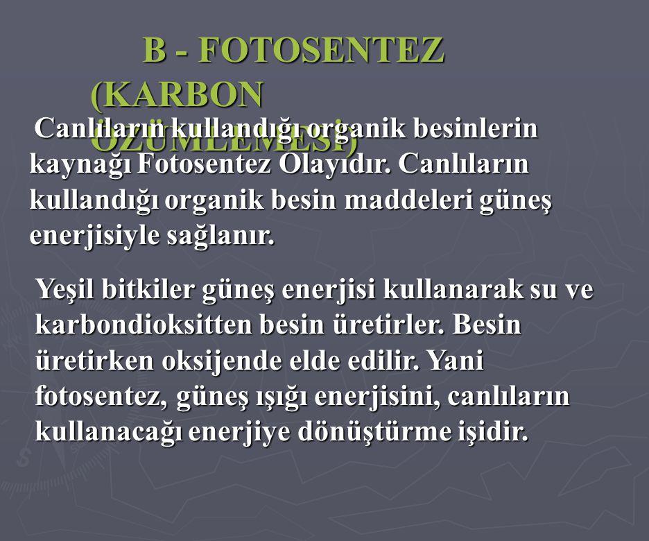 B - FOTOSENTEZ (KARBON ÖZÜMLEMESİ) Canlıların kullandığı organik besinlerin kaynağı Fotosentez Olayıdır.