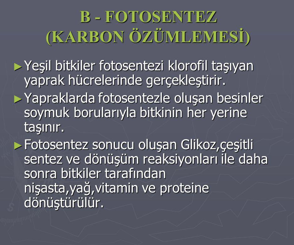 B - FOTOSENTEZ (KARBON ÖZÜMLEMESİ) ►Y►Y►Y►Yeşil bitkiler fotosentezi klorofil taşıyan yaprak hücrelerinde gerçekleştirir. ►Y►Y►Y►Yapraklarda fotosente