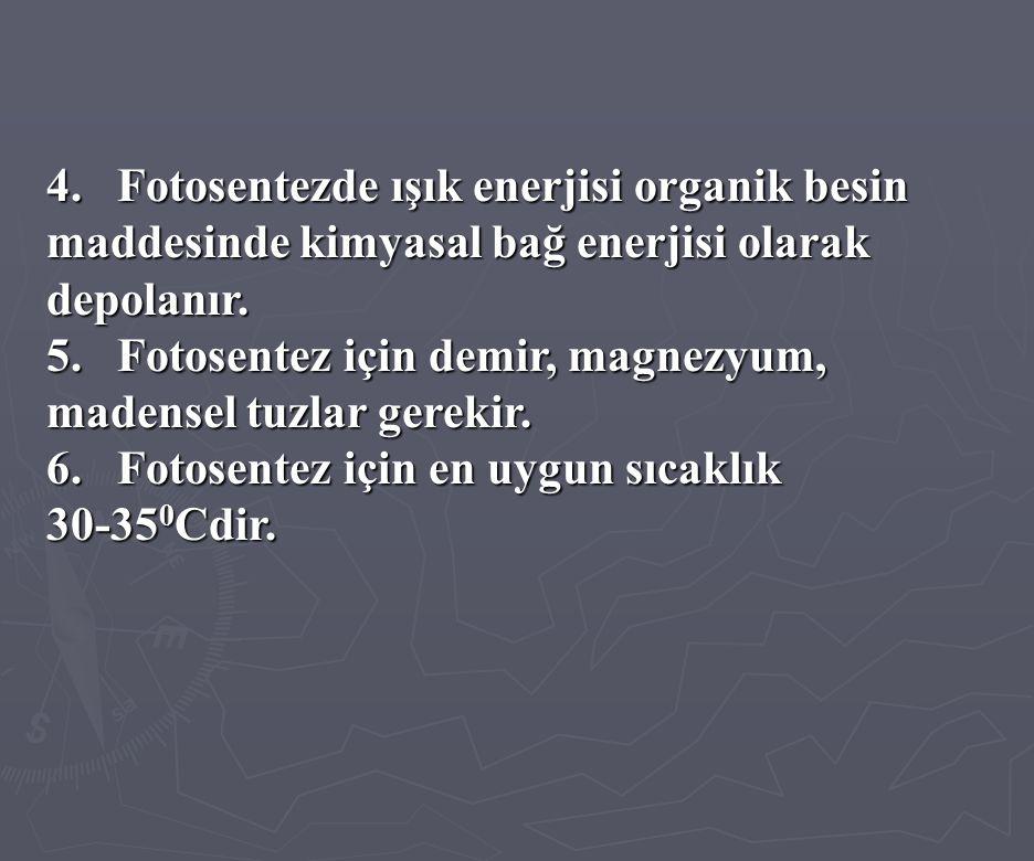 4. Fotosentezde ışık enerjisi organik besin maddesinde kimyasal bağ enerjisi olarak depolanır. 5. Fotosentez için demir, magnezyum, madensel tuzlar ge