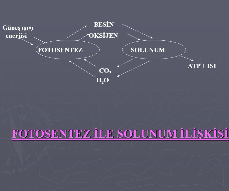 FOTOSENTEZ İLE SOLUNUM İLİŞKİSİ Güneş ışığı enerjisi BESİN OKSİJEN FOTOSENTEZSOLUNUM CO 2 H2OH2O ATP + ISI