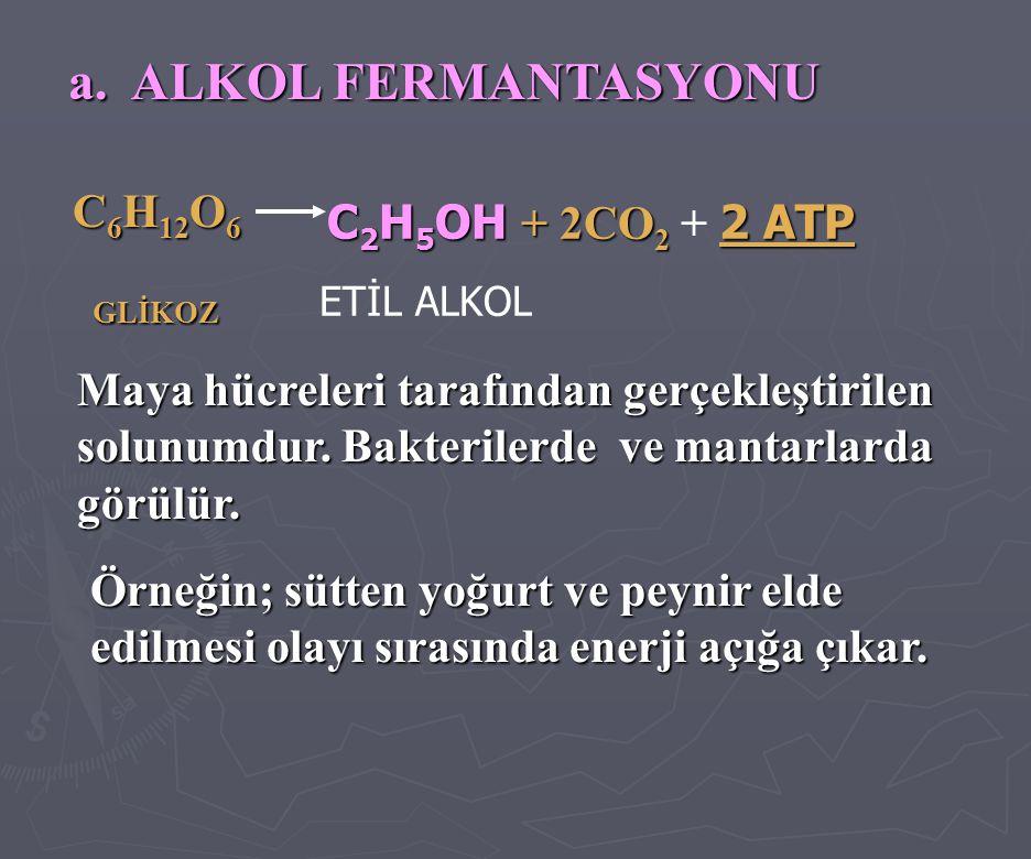 a. ALKOL FERMANTASYONU C 6 H 12 O 6 C 6 H 12 O 6 GLİKOZ GLİKOZ C 2 H 5 OH + 2CO 2 2 ATP C 2 H 5 OH + 2CO 2 + 2 ATP ETİL ALKOL Maya hücreleri tarafında