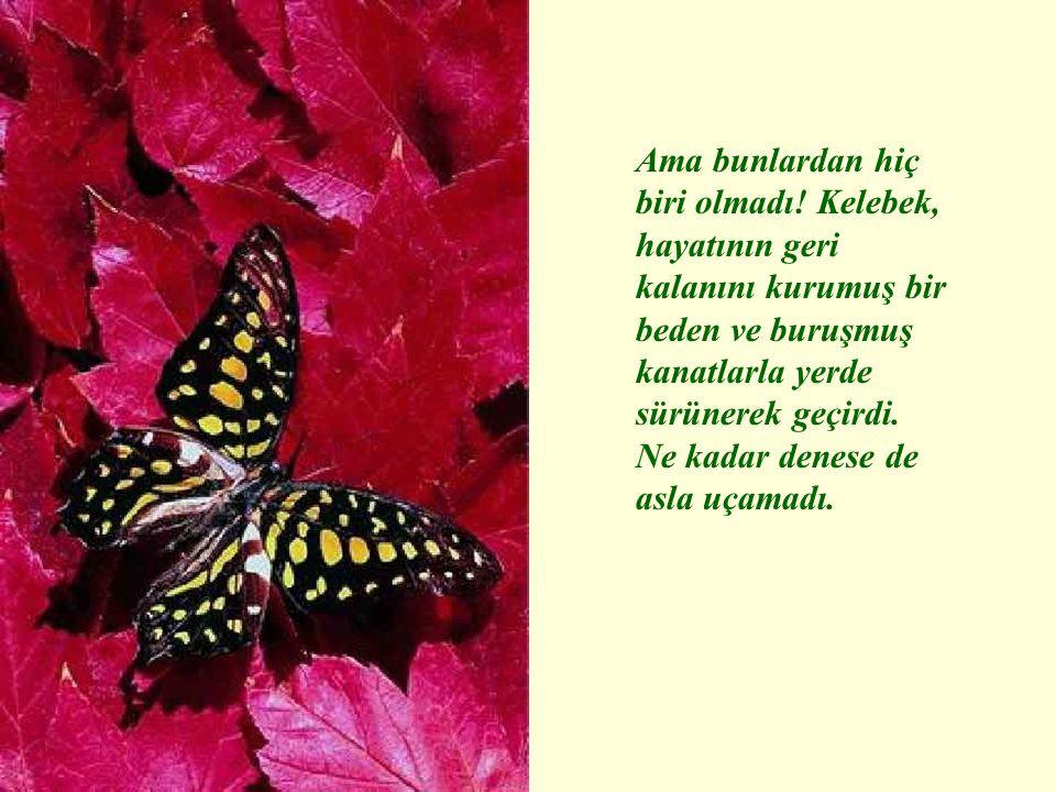 Ama bunlardan hiç biri olmadı! Kelebek, hayatının geri kalanını kurumuş bir beden ve buruşmuş kanatlarla yerde sürünerek geçirdi. Ne kadar denese de a