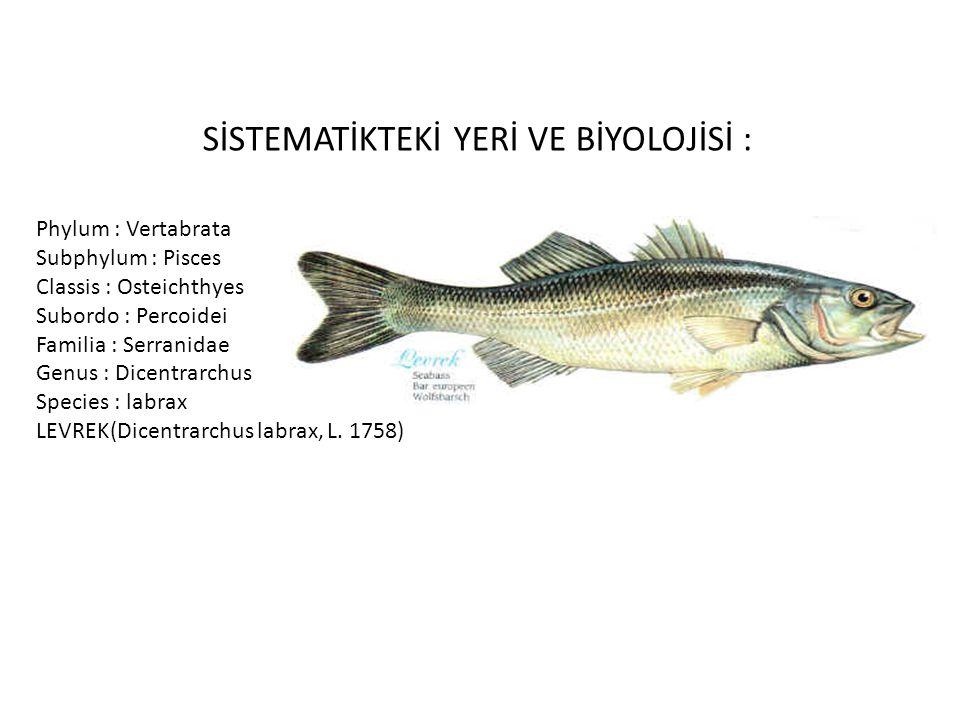 SİSTEMATİKTEKİ YERİ VE BİYOLOJİSİ : Phylum : Vertabrata Subphylum : Pisces Classis : Osteichthyes Subordo : Percoidei Familia : Serranidae Genus : Dic
