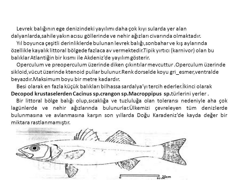 Levrek balığının ege denizindeki yayılımı daha çok kıyı sularda yer alan dalyanlarda,sahile yakın acısu göllerinde ve nehir ağızları civarında olmakta