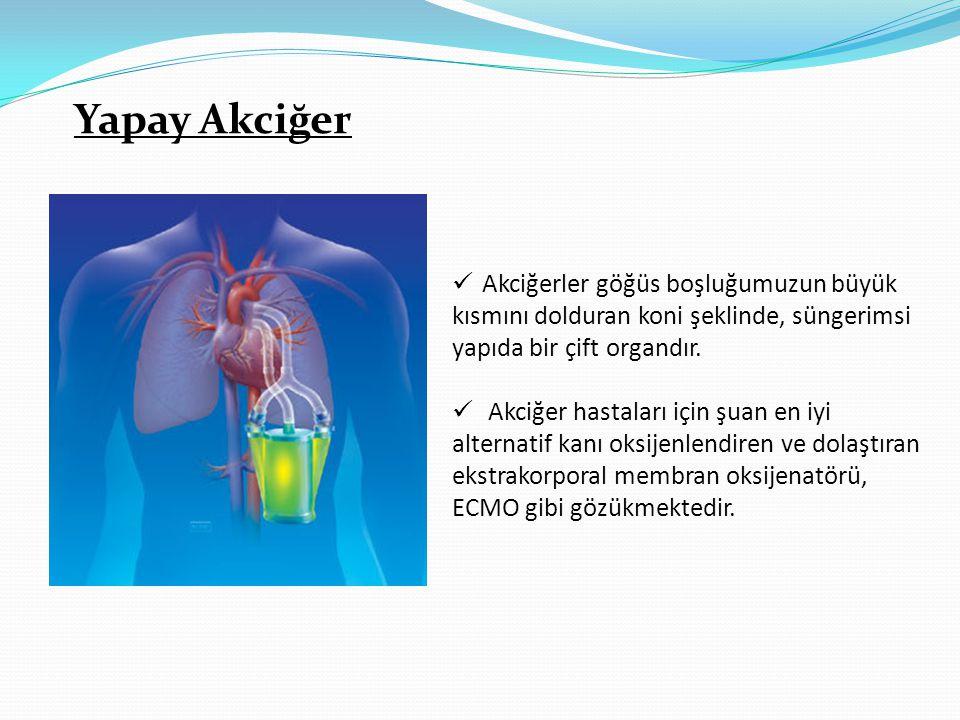 Yapay Akciğer  Akciğerler göğüs boşluğumuzun büyük kısmını dolduran koni şeklinde, süngerimsi yapıda bir çift organdır.  Akciğer hastaları için şuan
