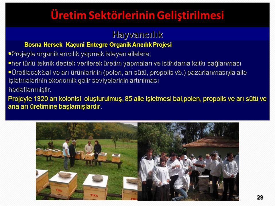 29 Üretim Sektörlerinin Geliştirilmesi Hayvancılık Bosna Hersek Kaçuni Entegre Organik Arıcılık Projesi  Projeyle organik arıcılık yapmak isteyen ail