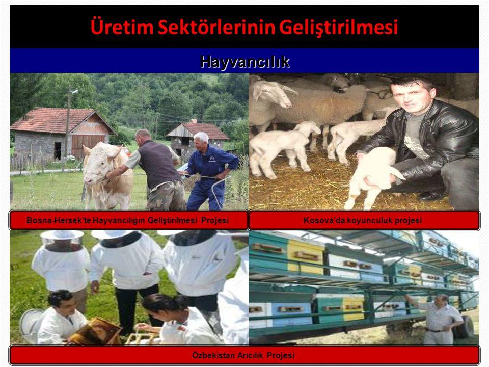 30 Üretim Sektörlerinin Geliştirilmesi Hayvancılık Bosna-Hersek'te Hayvancılığın Geliştirilmesi ProjesiKosova'da koyunculuk projesi Özbekistan Arıcılı