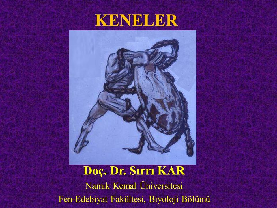 KENELER Doç. Dr. Sırrı KAR Namık Kemal Üniversitesi Fen-Edebiyat Fakültesi, Biyoloji Bölümü