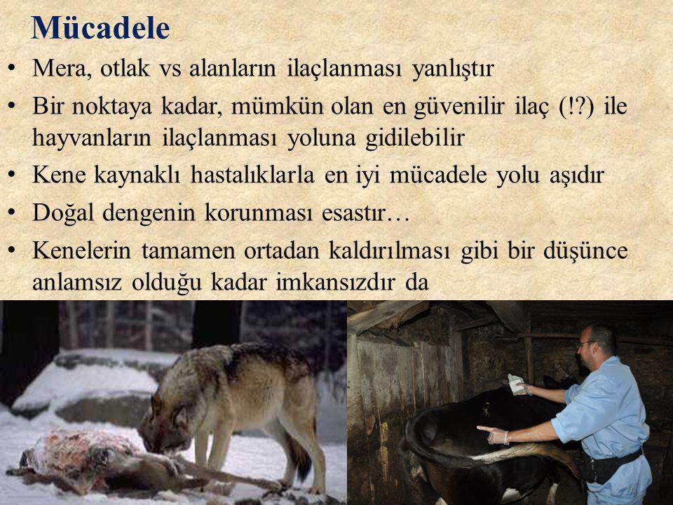Mücadele • Mera, otlak vs alanların ilaçlanması yanlıştır • Bir noktaya kadar, mümkün olan en güvenilir ilaç (!?) ile hayvanların ilaçlanması yoluna g