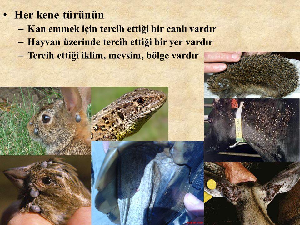 • Her kene türünün – Kan emmek için tercih ettiği bir canlı vardır – Hayvan üzerinde tercih ettiği bir yer vardır – Tercih ettiği iklim, mevsim, bölge