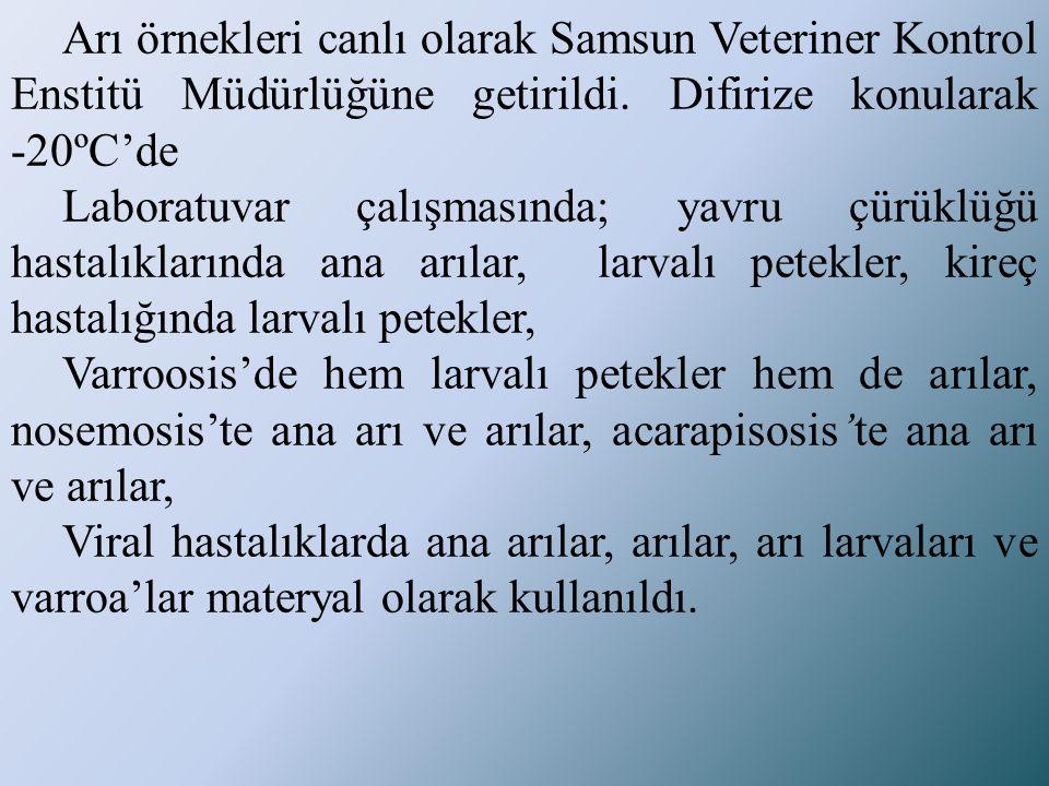 Arı örnekleri canlı olarak Samsun Veteriner Kontrol Enstitü Müdürlüğüne getirildi. Difirize konularak -20ºC'de Laboratuvar çalışmasında; yavru çürüklü