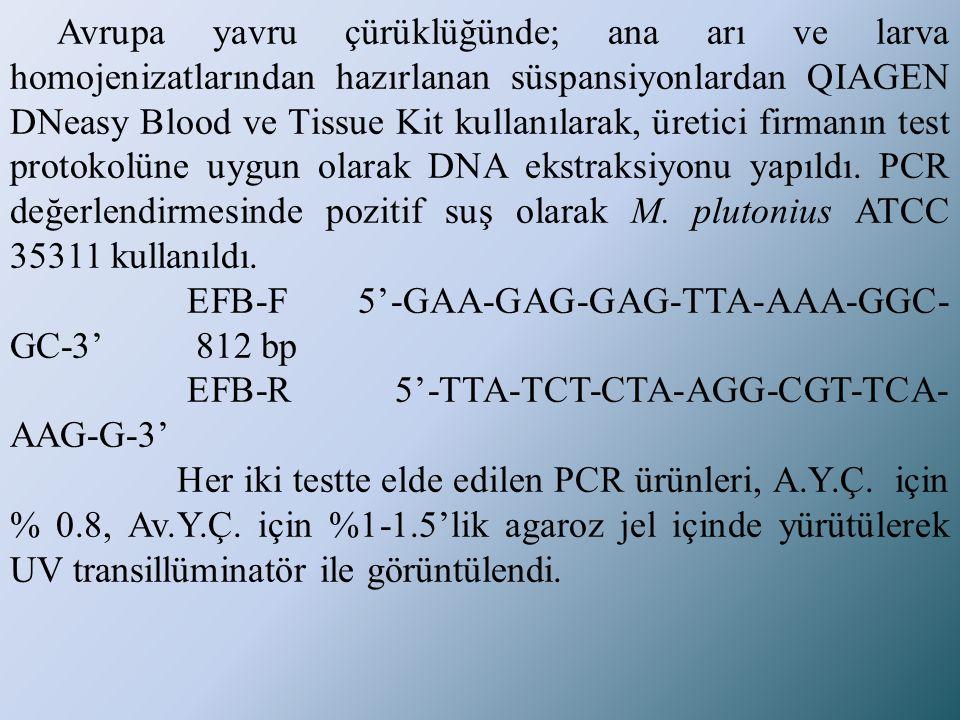 Avrupa yavru çürüklüğünde; ana arı ve larva homojenizatlarından hazırlanan süspansiyonlardan QIAGEN DNeasy Blood ve Tissue Kit kullanılarak, üretici f