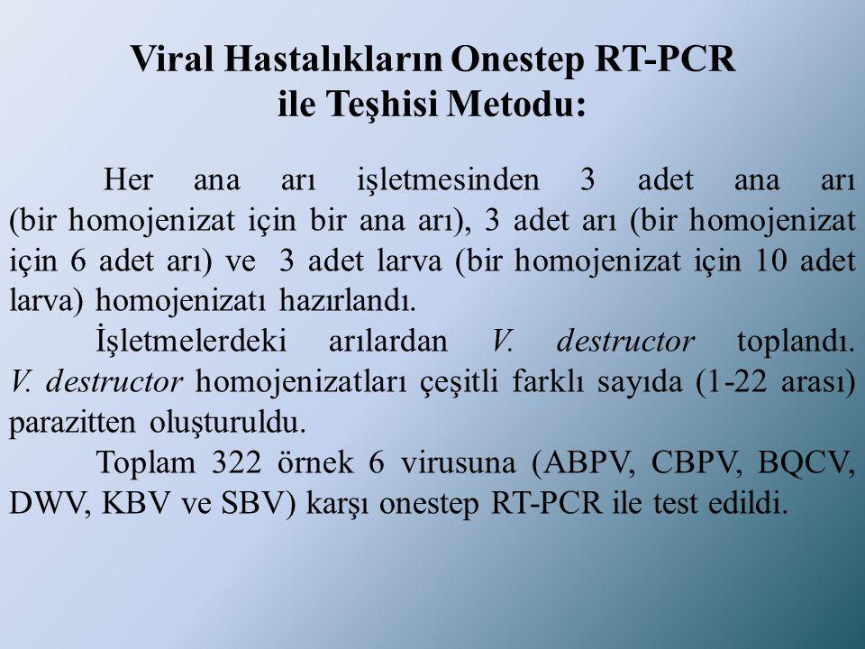 Viral Hastalıkların Onestep RT-PCR ile Teşhisi Metodu: Her ana arı işletmesinden 3 adet ana arı (bir homojenizat için bir ana arı), 3 adet arı (bir ho