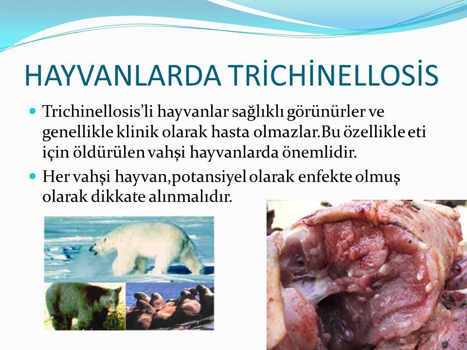 HAYVANLARDA TRİCHİNELLOSİS  Trichinellosis'li hayvanlar sağlıklı görünürler ve genellikle klinik olarak hasta olmazlar.Bu özellikle eti için öldürüle