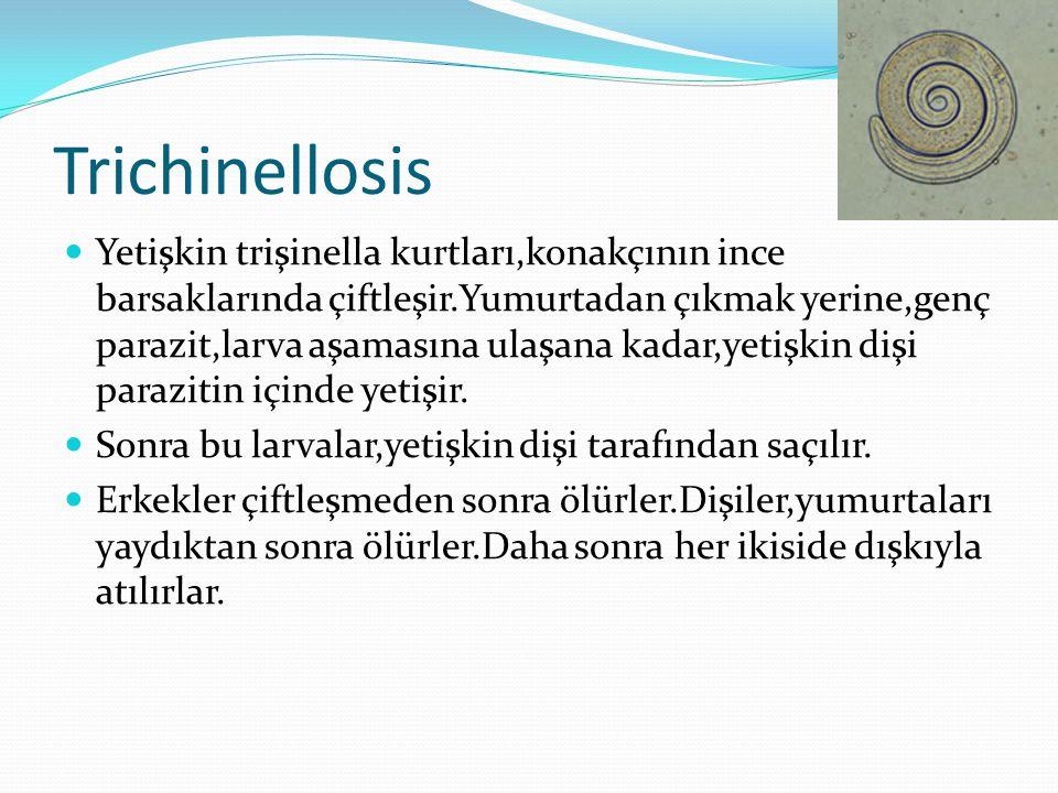 Trichinellosis  Larvalar,barsak duvarını delerler,lenf ve kan sistemine girerler ve vücudun her yerindeki değişik dokulara taşınırlar.Bu dokulara,çizgili kaslarda dahildir.