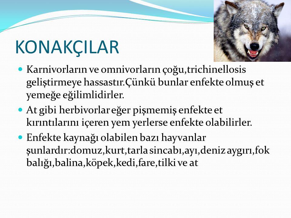 KONAKÇILAR-2  Geçmişte,enfeksiyonun başlıca kaynağı domuzlardı.Çünkü onların yedikleri pişmemiş,enfekte olmuş et içeren pişmemiş çöpten ibaretti.