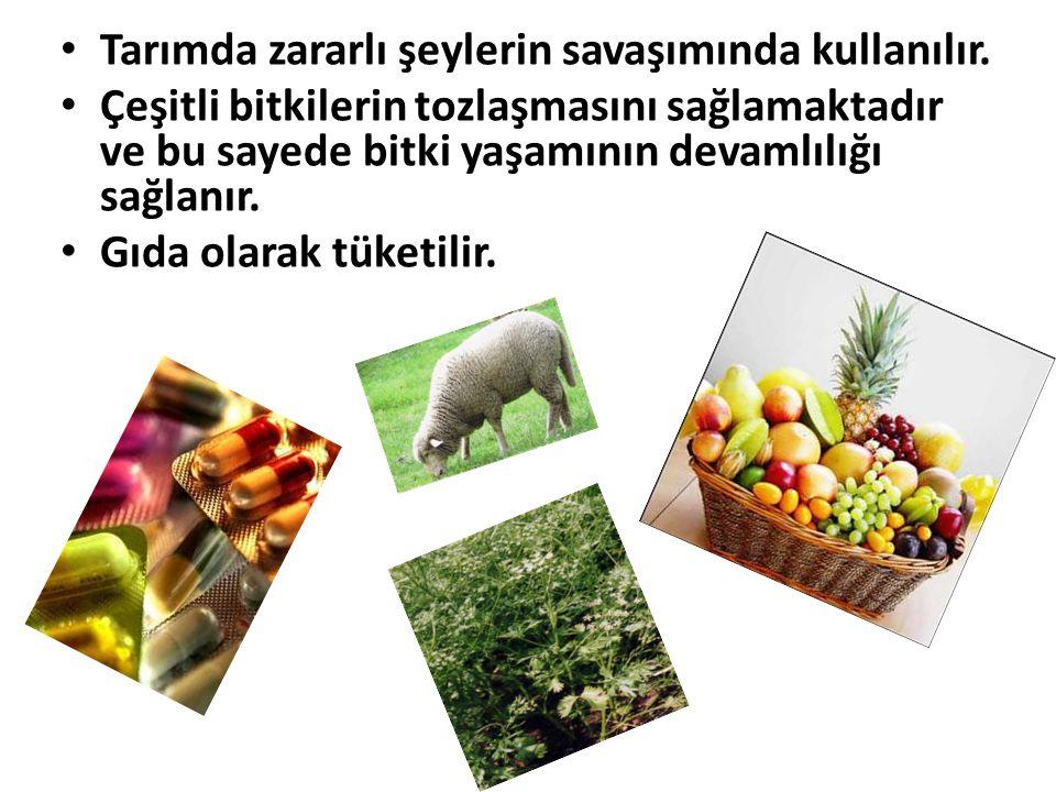 • Tarımda zararlı şeylerin savaşımında kullanılır. • Çeşitli bitkilerin tozlaşmasını sağlamaktadır ve bu sayede bitki yaşamının devamlılığı sağlanır.