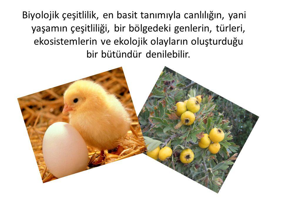 Biyolojik çeşitlilik, en basit tanımıyla canlılığın, yani yaşamın çeşitliliği, bir bölgedeki genlerin, türleri, ekosistemlerin ve ekolojik olayların o