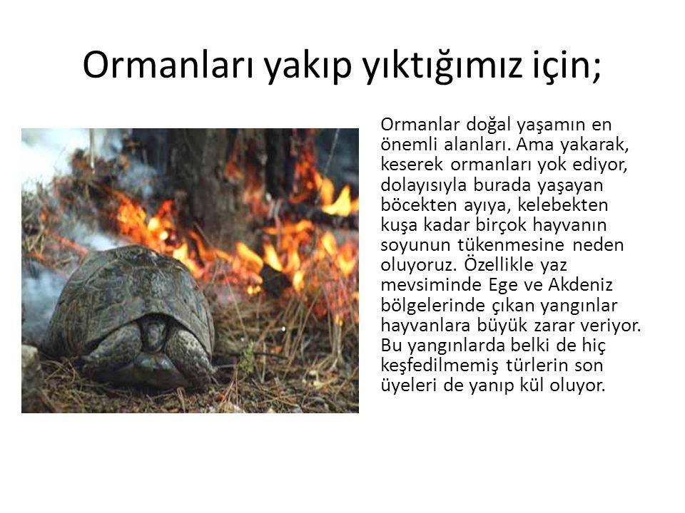 Ormanları yakıp yıktığımız için; Ormanlar doğal yaşamın en önemli alanları. Ama yakarak, keserek ormanları yok ediyor, dolayısıyla burada yaşayan böce