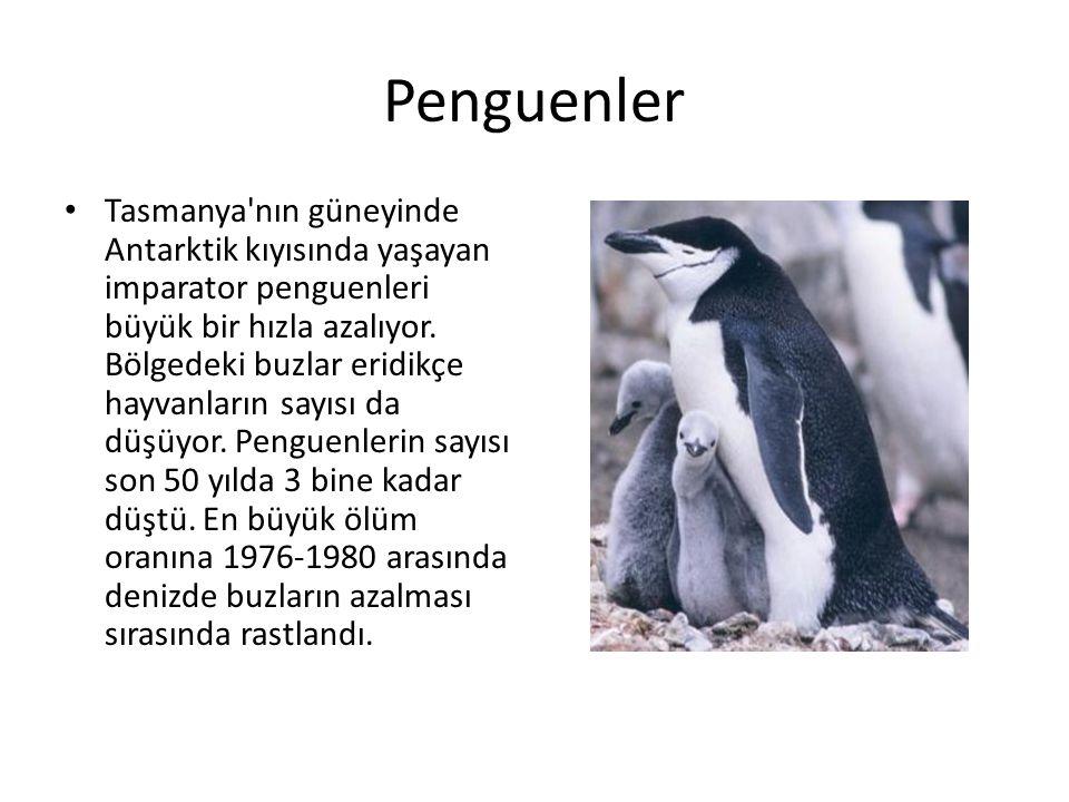 Penguenler • Tasmanya'nın güneyinde Antarktik kıyısında yaşayan imparator penguenleri büyük bir hızla azalıyor. Bölgedeki buzlar eridikçe hayvanların