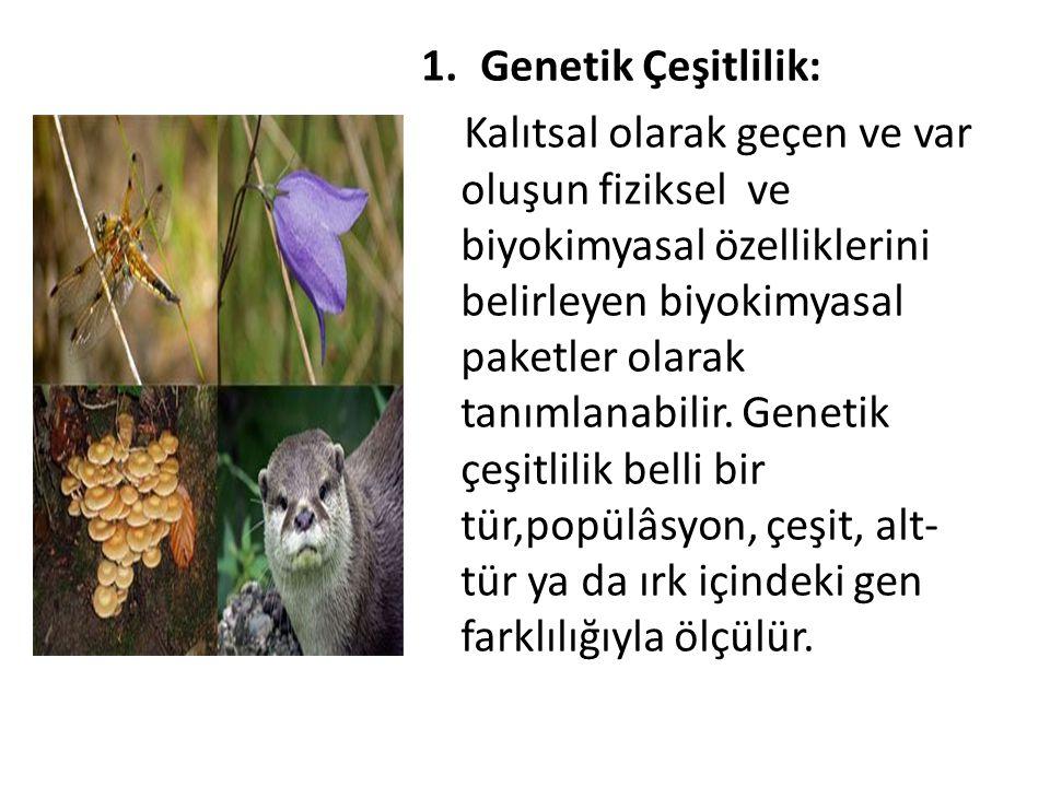 1.Genetik Çeşitlilik: Kalıtsal olarak geçen ve var oluşun fiziksel ve biyokimyasal özelliklerini belirleyen biyokimyasal paketler olarak tanımlanabili