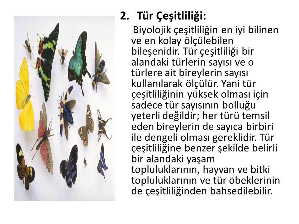 2.Tür Çeşitliliği: Biyolojik çeşitliliğin en iyi bilinen ve en kolay ölçülebilen bileşenidir. Tür çeşitliliği bir alandaki türlerin sayısı ve o türler