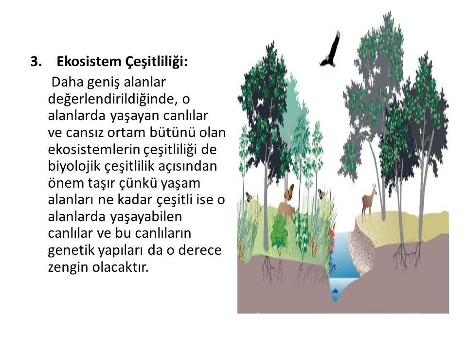 3.Ekosistem Çeşitliliği: Daha geniş alanlar değerlendirildiğinde, o alanlarda yaşayan canlılar ve cansız ortam bütünü olan ekosistemlerin çeşitliliği