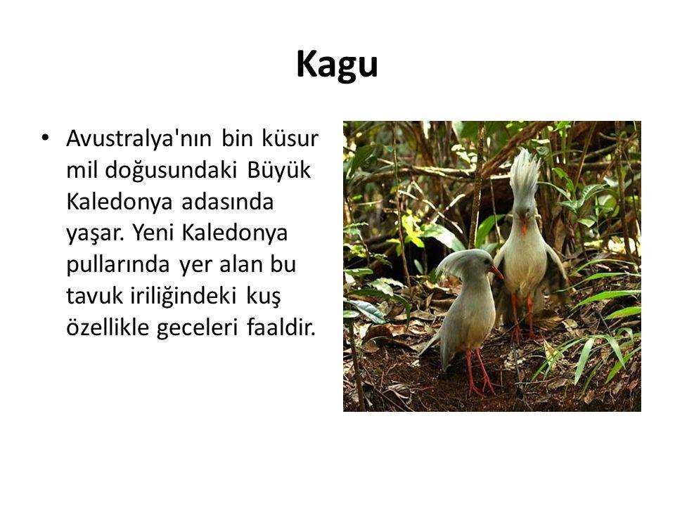 Kagu • Avustralya'nın bin küsur mil doğusundaki Büyük Kaledonya adasında yaşar. Yeni Kaledonya pullarında yer alan bu tavuk iriliğindeki kuş özellikle
