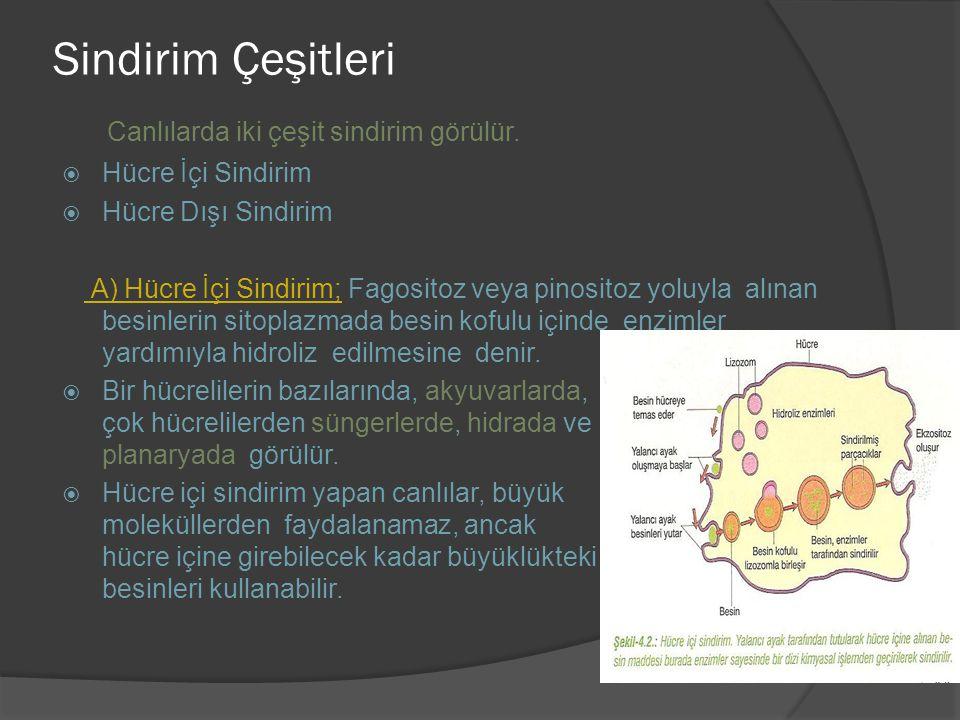 Sindirim Çeşitleri Canlılarda iki çeşit sindirim görülür.  Hücre İçi Sindirim  Hücre Dışı Sindirim A) Hücre İçi Sindirim; Fagositoz veya pinositoz y