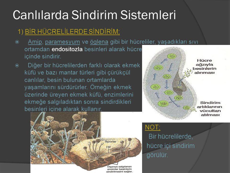 Canlılarda Sindirim Sistemleri 1) BİR HÜCRELİLERDE SİNDİRİM;  Amip, paramesyum ve öglena gibi bir hücreliler, yaşadıkları sıvı ortamdan endositozla b