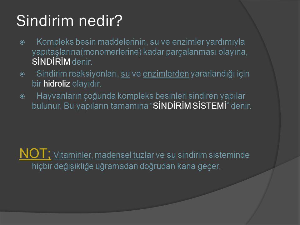 2) BİTKİLERDE SİNDİRİM;  Özel olarak gelişmiş sindirim sistemleri yoktur.